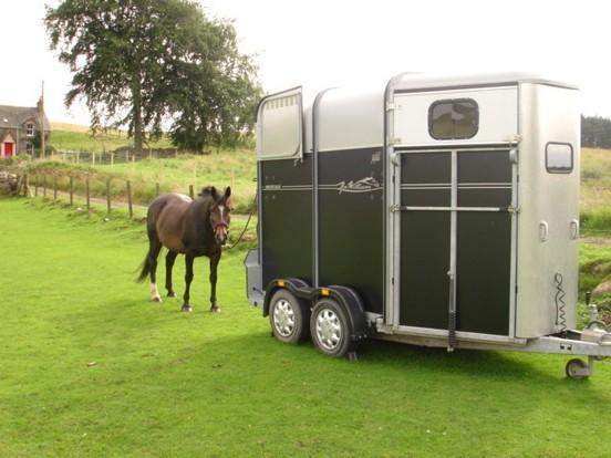 horsebox-trailer