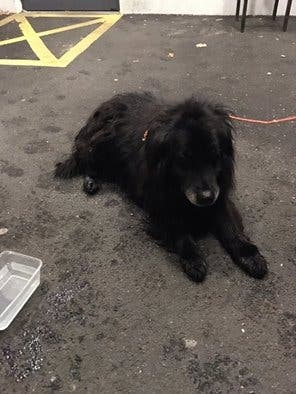 derry-dog-found