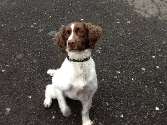 Police dog Rosie sniffs out more drugs in the Waterside